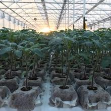PIANTINE | VIVAI BIO PLANT | ORTOFLOROVIVAISMO | SCICLI - RAGUSA - SICILIA