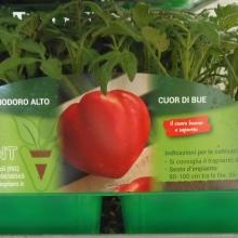 PIANTINE LINEA HOBBY | VIVAI BIO PLANT | ORTOFLOROVIVAISMO | SCICLI - RAGUSA - SICILIA