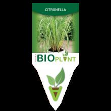 CITRONELLA-VIVAI BIOPLANT - SCICLI -