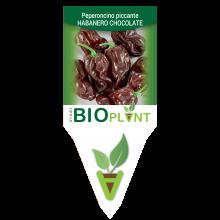 PEPERONCINO PICCANTE HABANERO CHOCOLATE-VIVAI BIOPLANT - SCICLI -