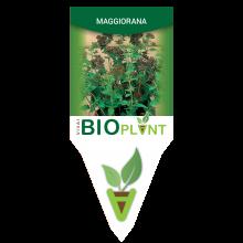 MAGGIORANA-VIVAI BIOPLANT - SCICLI -