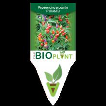 PEPERONCINO PICCANTE PYRAMID-VIVAI BIOPLANT - SCICLI -