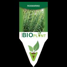 ROSMARINO-VIVAI BIOPLANT - SCICLI -