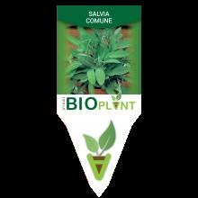 SALVIA COMUNE-VIVAI BIOPLANT - SCICLI -