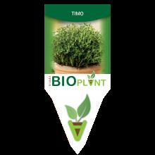 TIMO-VIVAI BIOPLANT - SCICLI -